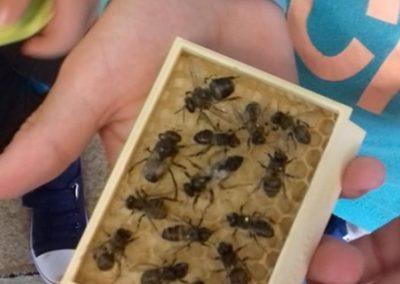 pszczoły002