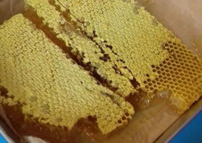 pszczoły003